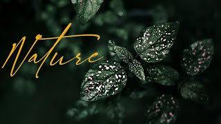 For the Love of Nature | Cinematic Film | 4K |