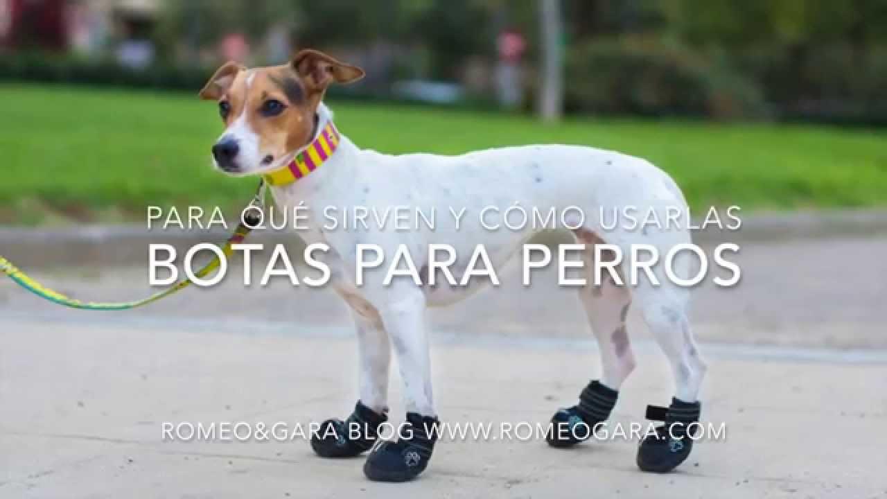 botas e impermeable para perro