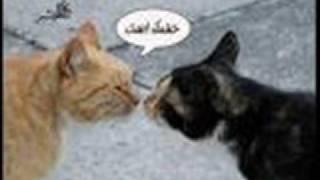 ساريه السواس - بسبوس عاشق بسه