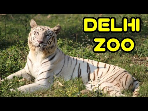 DELHI ZOO/दिल्ली का चिड़ियाघर