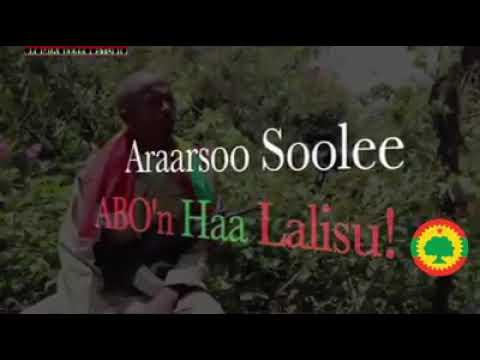 Araarsoo Soolee Wbo'n Ha Lelisu 2018