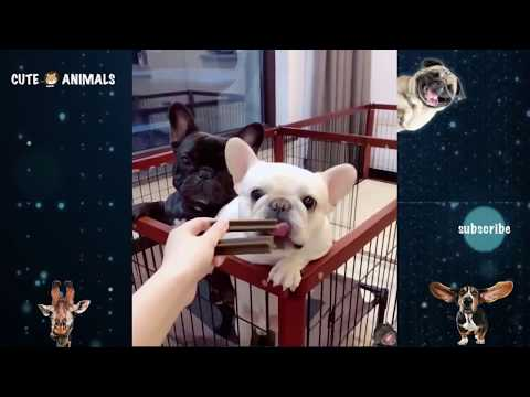 Tik Tok Cat, Dog, Animals: Funny Cute Pets Compilation #20