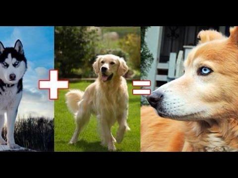 Dog Cross Breeds You Never Heard Of