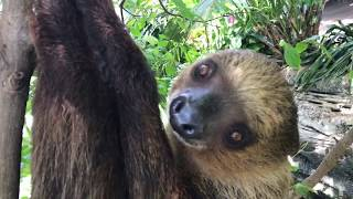 Green Planet City Walk | Watch A Sloth Eating | Rainforest Dubai