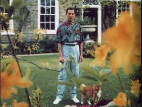 Inside Freddie Mercury's Final Days and Death at 45 from AIDS |Last Picture Of Freddie Mercury Alive