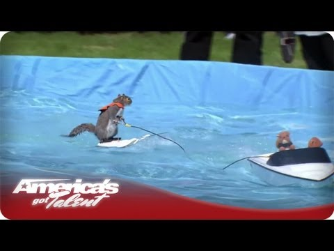 Twiggy the Waterskiing Squirrel - America's Got Talent Season 7 - Audition