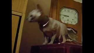 Джулия Ванг-Женщина Кошка
