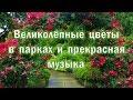 6. Парад цветов под красивую классическую музыку.