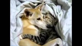 Дружба кошек и собак  Трогательное видео дружбы и милые приколы с кошками и собаками