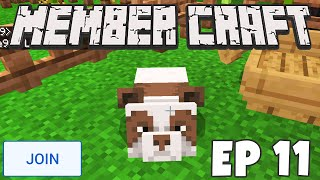 We Bred A *SHINY BROWN PANDA* in Minecraft! | MEMBER CRAFT EP 11
