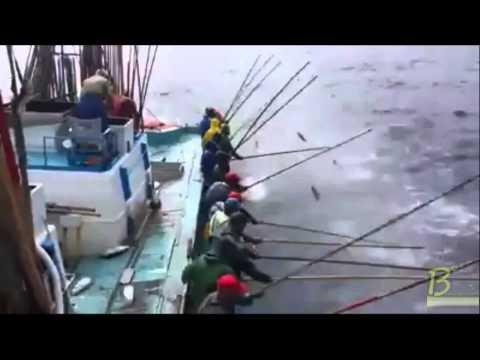 Câu cá siêu tốc kiểu Thổ Nhĩ Kỳ