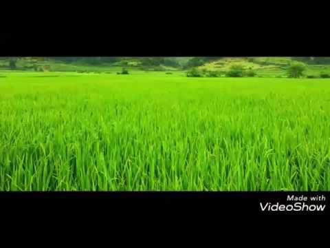 Punjai Undu Nanjai Undu Song for Tamil People dedicated