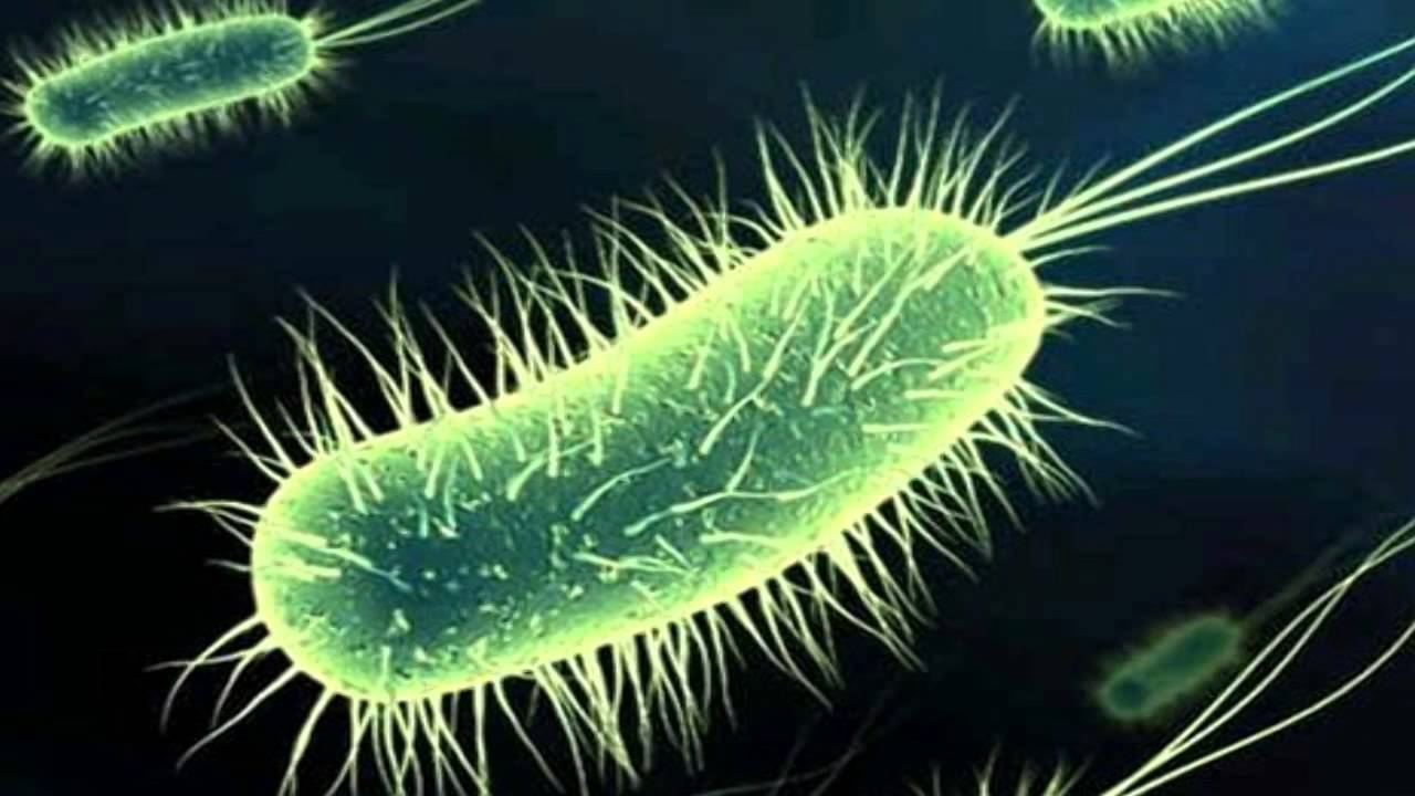 Medical Wallpaper Hd Escherichia Microbiolog 237 A Bacteriolog 237 A Cl 237 Nica Youtube