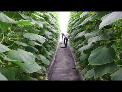 Commercial Hydroponics Farm in India