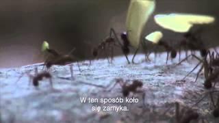 The Last of Us - Podłoże naukowe PL