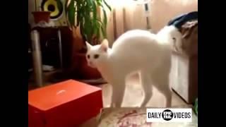 Дьявольский кот! Вы должны это видеть!