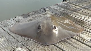 Pier Fishing For Stingrays (pt 1)