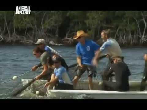 4. серия. Крупнейшая спасательная операция. Отдел по защите животных, Майами