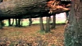 видео Арктур - гончий пес - Казаков Юрий Павлович - читать бесплатно книгу онлайн или скачать бесплатно книгу
