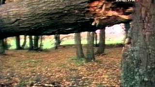 видео Юрий Казаков: Арктур – гончий пёс