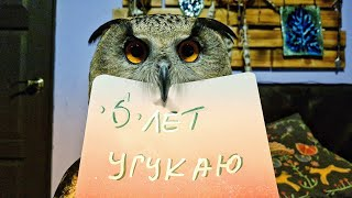 Yoll the Eagle Owl channel is 6 years old! Thank you for being with us!