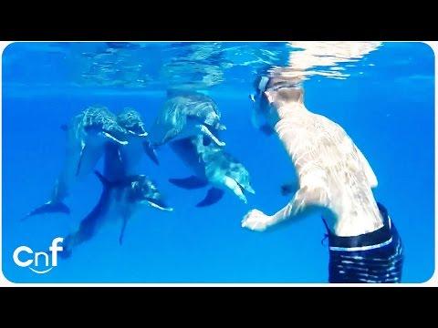 Dolphin Says Hi to Snorkeler   Dolphin Whisperer