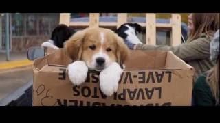 Жизнь и цель собаки | Dog's purpose трогательное кино!