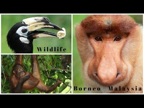 Top Travel Tips | Borneo Nature & Wildlife | MALAYSIA