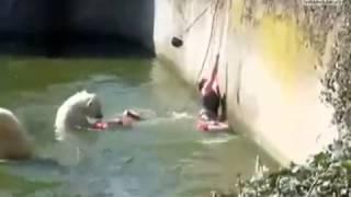 Mulher Cai na Piscina  de Ursos Polores E é Atacada