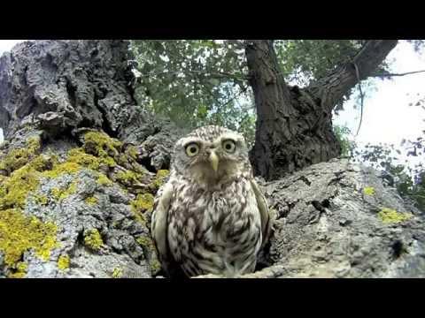 Смешные совы (21 фото) » Триникси