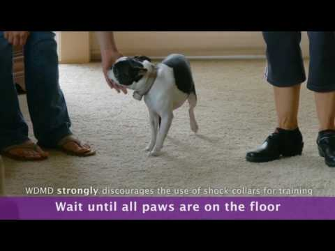 How To Stop a Dog From Jumping:  Ingoring