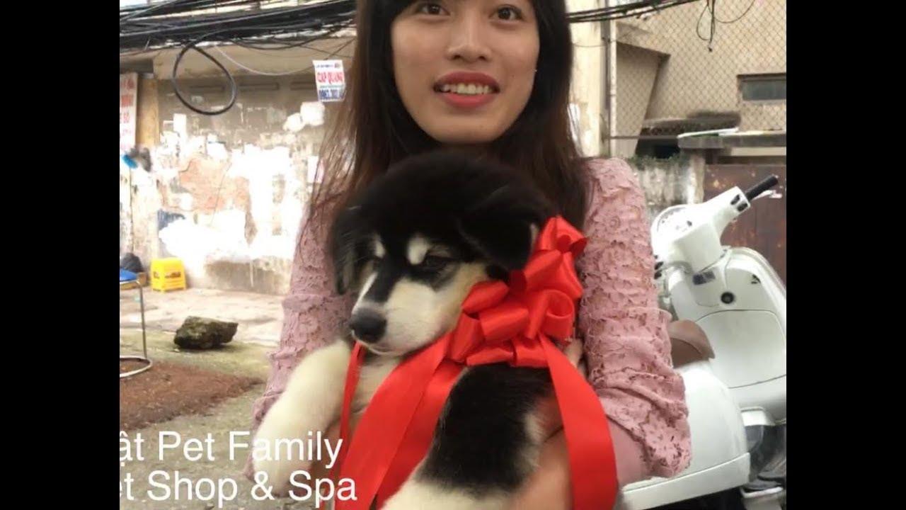 Bất ngờ được tặng Alaska ngày sinh nhật - chị khách hạnh phúc của Mật Pet là đây^^