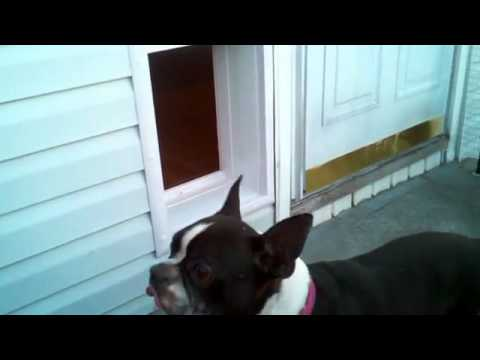 Power Pet Door Real User Videos 117 Youtube