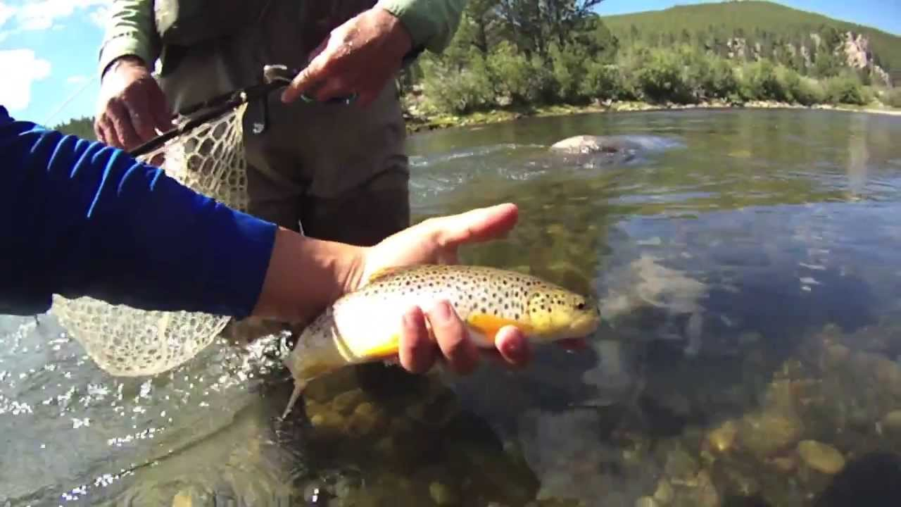Fly fishing arkansas river for brown trout salida for Arkansas river colorado fishing