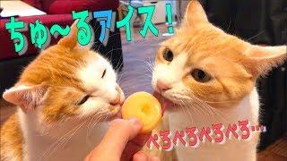 猫界隈で人気のチュールでアイスを作ってみたら、猫たちの食いつきがヤバすぎたという動画