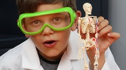 Human Skeleton and Anatomy - Model Building, Bones, Fun Facts and More! ⚗⚠️ Fun Science for Kids⚗⚠️