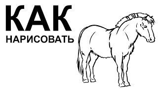 Лошадь рисунок карандашом. КАК НАРИСОВАТЬ ЛОШАДЬ(Как нарисовать лошадь поэтапно карандашом для начинающих за короткий промежуток времени. http://youtu.be/GgPAkEyc39Y..., 2015-06-22T08:42:10.000Z)