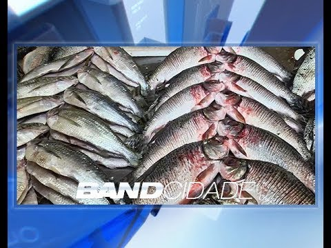 A um mês da Semana Santa, procura por pescado ainda é pequena