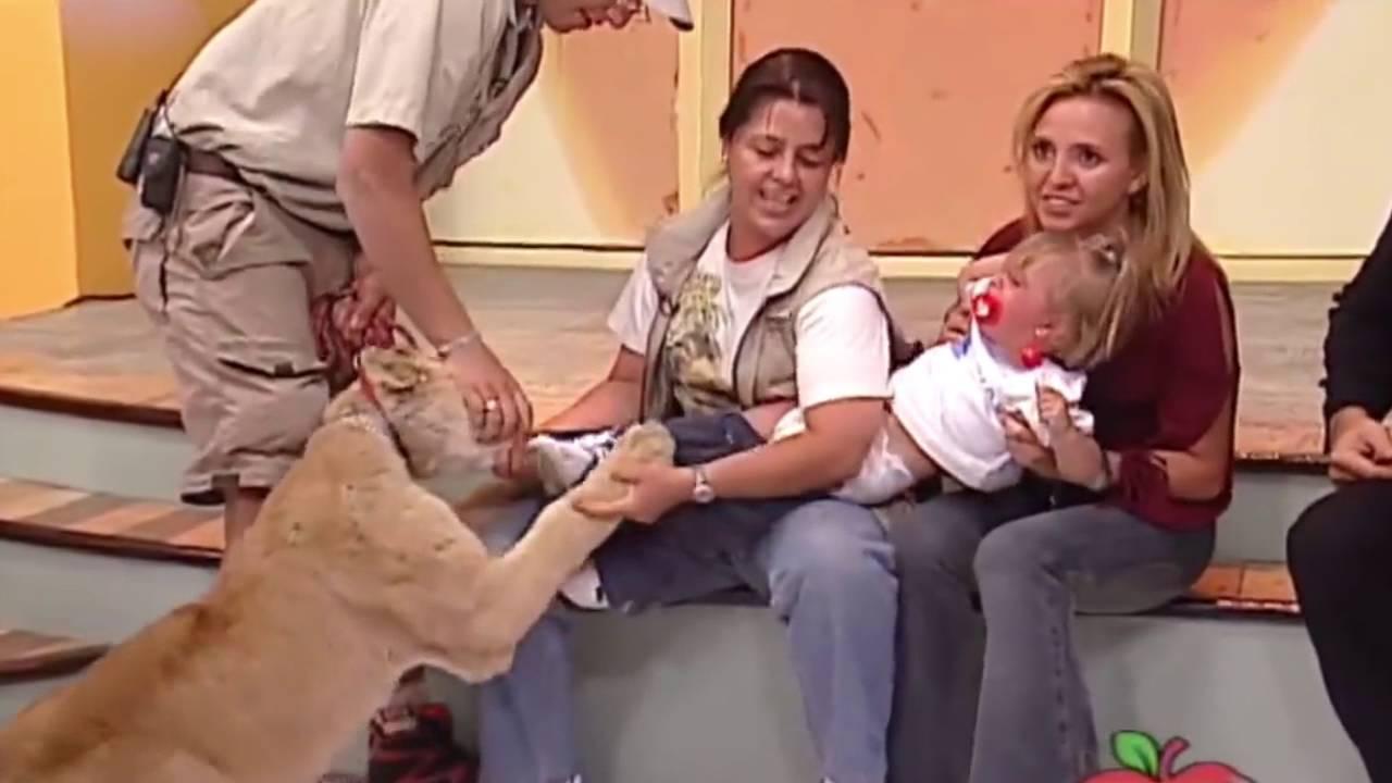 Leão ataca criança ao vivo na TV