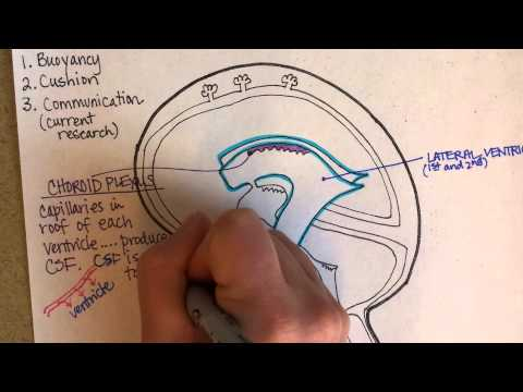 Cerebrospinal Fluid and Ventricles, Part 1