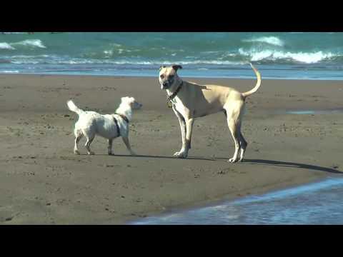 Little Dog Meets Big Dog