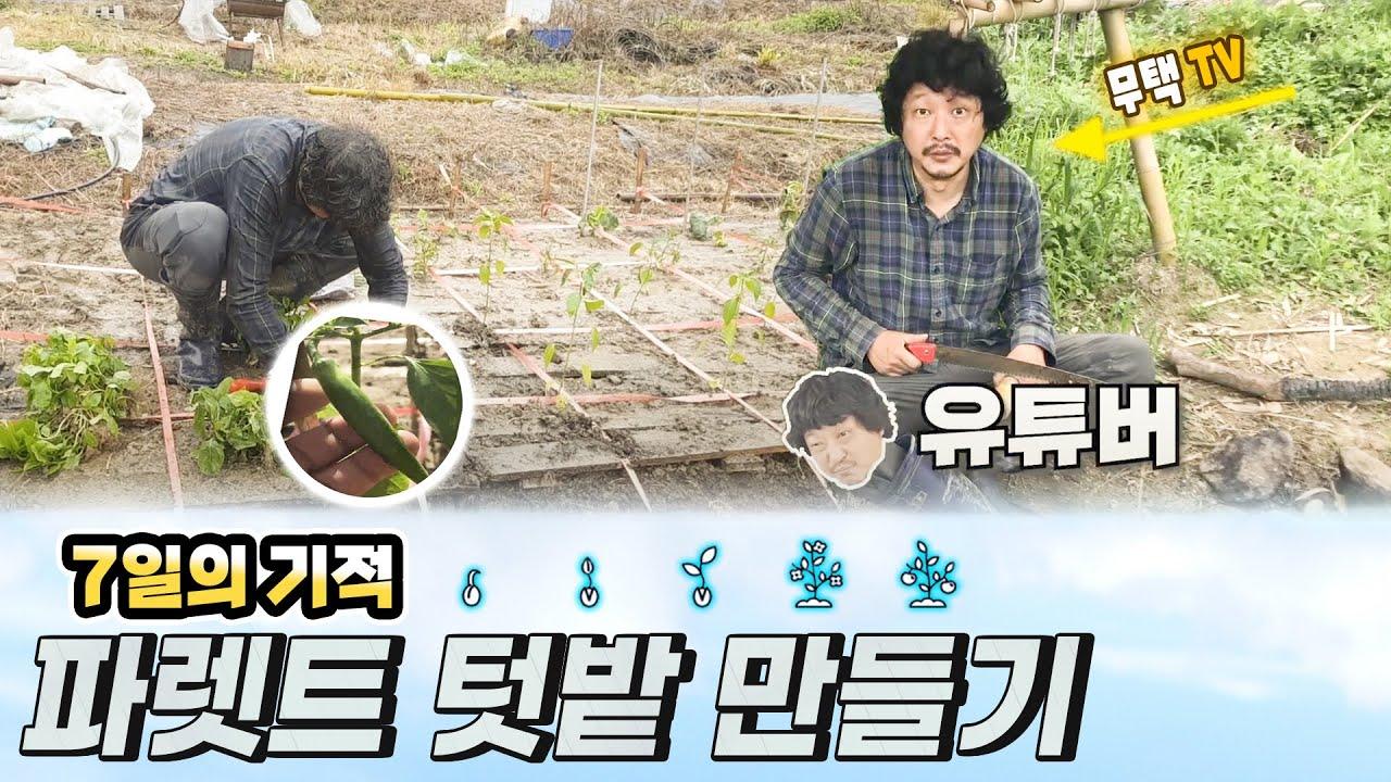 자연인의 농사의숲 1_13화, (자급자족, 백패팅, 파렛트, 고추, 오이, 취나물, 파, 부시크래프트, Bushcraft, Survival, Self sufficiency)