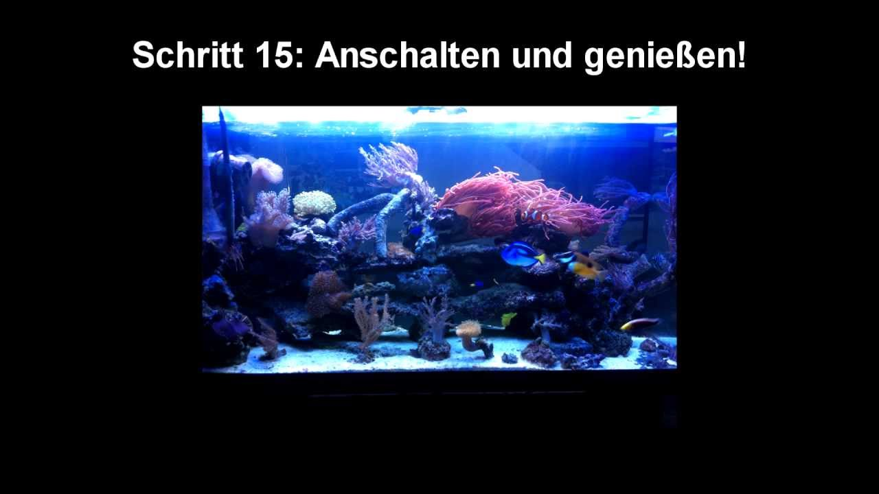 tutorial diy led beleuchtung f r ein salzwasseraquarium youtube. Black Bedroom Furniture Sets. Home Design Ideas
