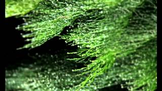 Earth's Cry (Original Composition) - Eco Music Challenge 2013