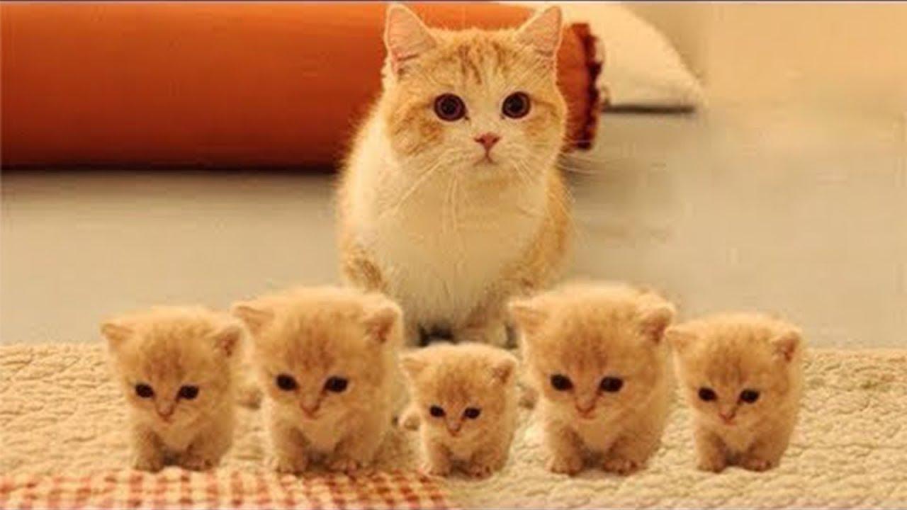 Очаровательные котята играют 🐱🐱 Самое забавное видео ...