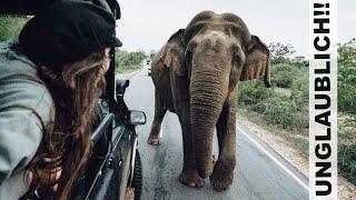 WILDE ELEFANTEN auf der STRAßE! l Safari im Yala Nationalpark - Sri Lanka