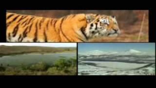 Tiger ancestors and tiger lands