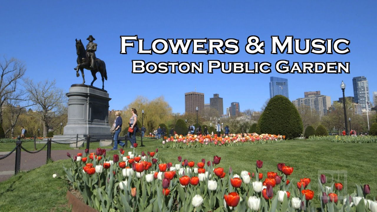Boston public garden a spring day of flowers music swan boats boston public garden a spring day of flowers music swan boats mightylinksfo