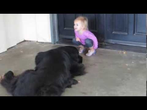 newfoundland-dog-hears-a-story