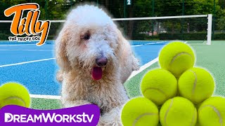 Tilly Causes A Racquet | TILLY THE TRICKY DOG